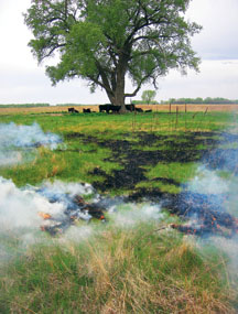 The Ecology And Management Of Prairies In The Central border=