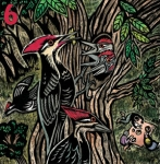 Pileated woodpeckers.jpg